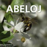 Abeloj