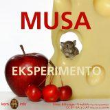 Musa eksperimento